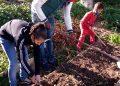 A produção da horta no jardim Filhos da Terra abastece cestas de alimentos agroecológicos. Foto: divulgação