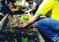 Na zona norte de São Paulo, bairro do Tremembé, o professor Wagner Ramalho criou o projeto Prato Verde Sustentável para produzir alimentos orgânicos no jardim Filhos da Terra. Foto: divulgação